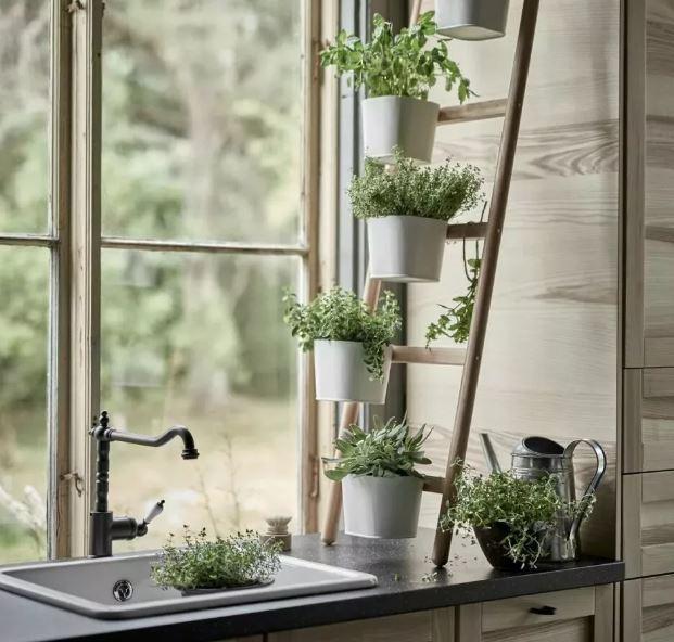 Растения на подоконниках